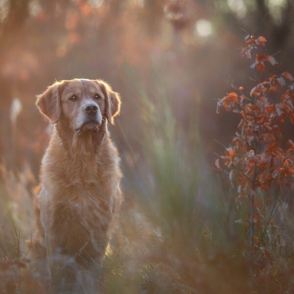 Sonnentier_Photography-IMG_6754-Bearbeitet-WEB